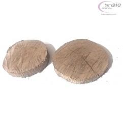 פרוסת עץ אלון עגולה בקוטר כ 15 - 20 סמ ובעובי כ 2 - 3 סמ